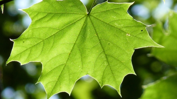 Solar-powered heart: Stanford scientists explore using photosynthesis to help damaged hearts